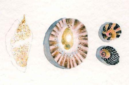 Watercolour Pencil shells drawing 5
